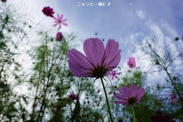 kosusora828.jpg