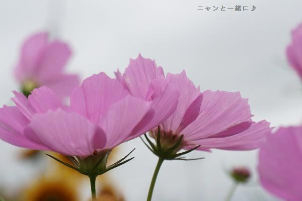 pinnkosu904.jpg
