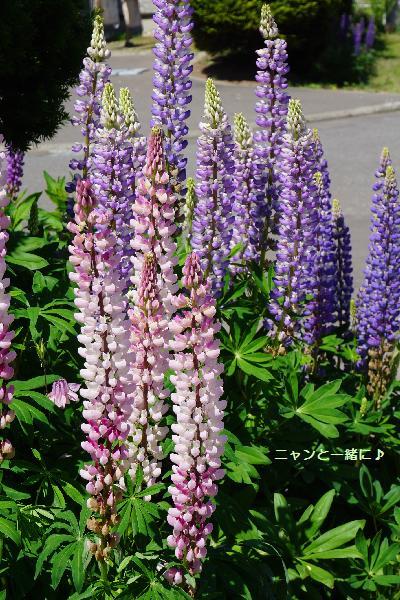 sakasafuji610.jpg