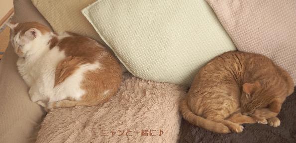 sofa-ck69.jpg