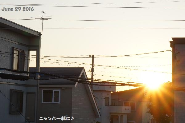 yuhi62916.jpg