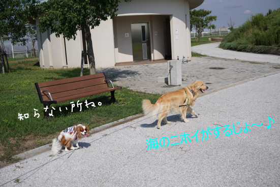 DSC04045.jpg