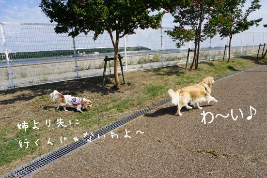 DSC04051_20160929211349b55.jpg