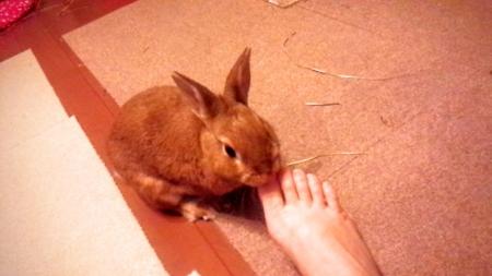 足の爪を噛む
