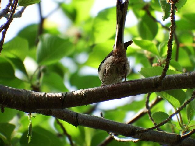 経法大・居るのはわかってても中々撮影出来ない鳥ランキング