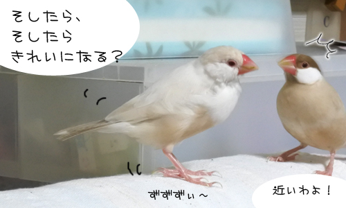 ヘアーサロン「ちゃちゃ」へお出かけ_5
