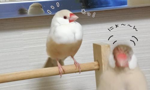 ちゃちゃの新作&3羽の元気復活_4