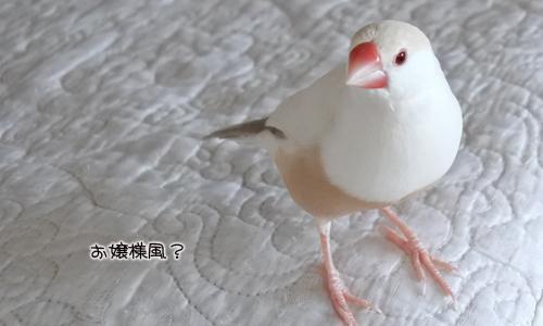 ちゃちゃの新作&3羽の元気復活_5
