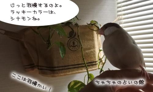 鳥の占い_2