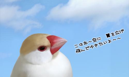 文鳥に歌わせてはいけない曲_2