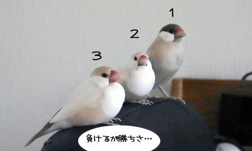 夏支度その2 & マウンティングランキング?_6