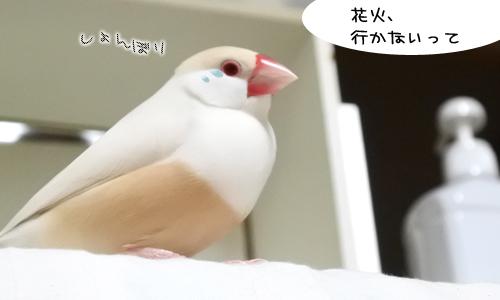 泣くなピノしゃん_3