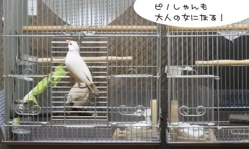 泣くなピノしゃん_4