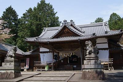 160412ムラサキツツジの伊奈冨神社