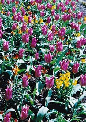 960507プロスペクトポイント花