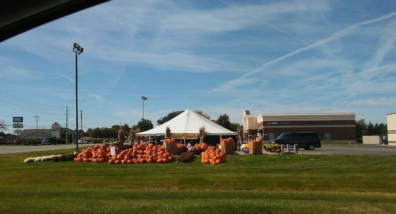 pumpkinforhaloween.jpg