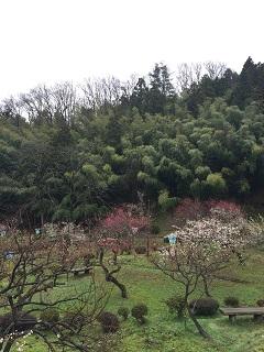 梅林公園 梅まつり 2016 8