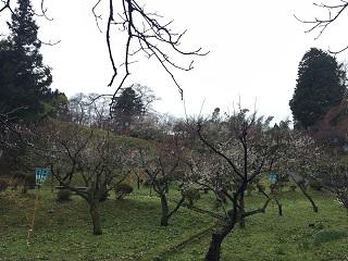 梅林公園 梅まつり 2016 9