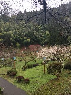 梅林公園 梅まつり 2016 3