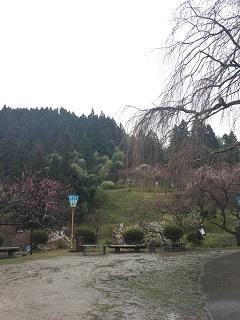 梅林公園 梅まつり 2016 2