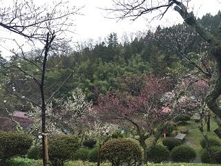 梅林公園 梅まつり 2016 4