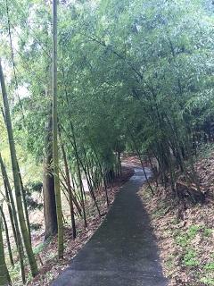 梅林公園 梅まつり 2016 5