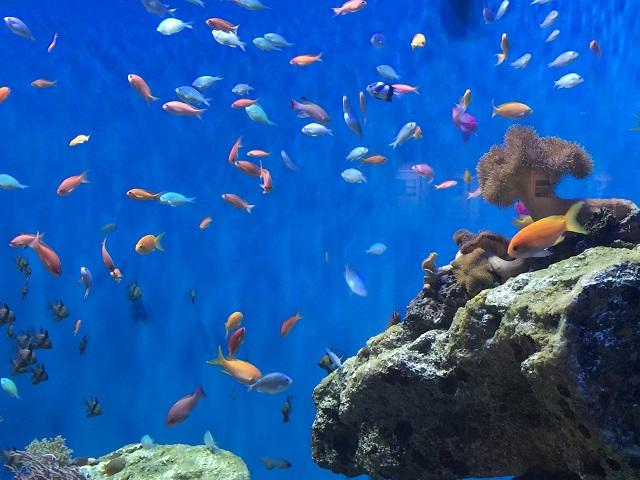 仙台うみの杜水族館4