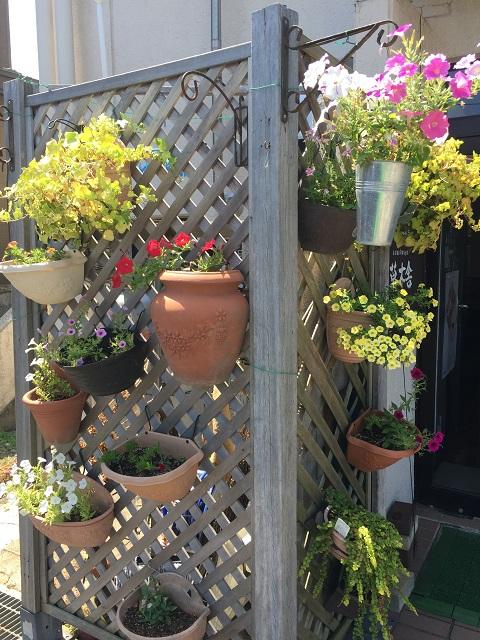 自家焙煎珈琲店 草木舎 植物