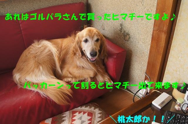 DSC06867_1.jpg