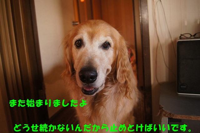 DSC07124_201609241548208b9.jpg