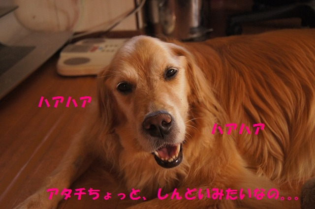 DSC07127_20160924154824b2d.jpg