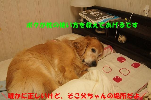 DSC07166.jpg