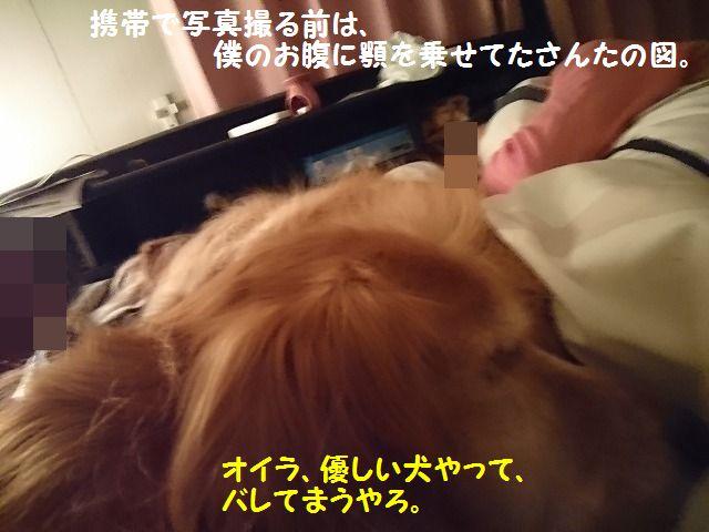 DSC_0222_2016101319444034c.jpg