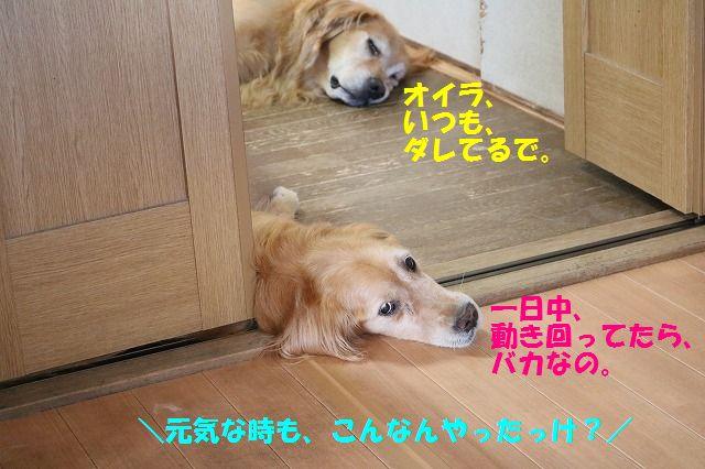 IMG_1585_201608232148553a8.jpg