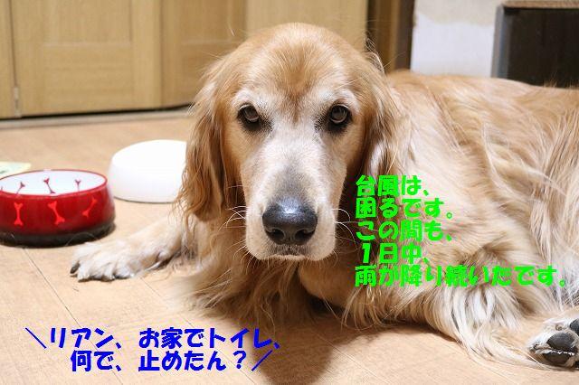 IMG_2346_201609012345046a3.jpg