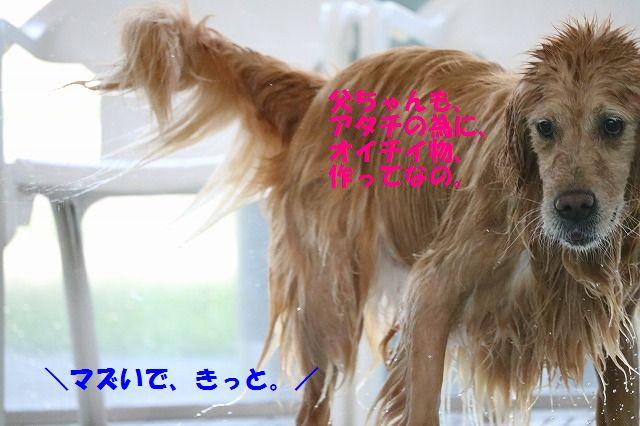 IMG_2661_20160906193453f1e.jpg