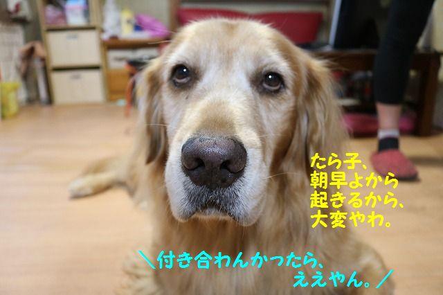 IMG_5489_20161013202300bb7.jpg