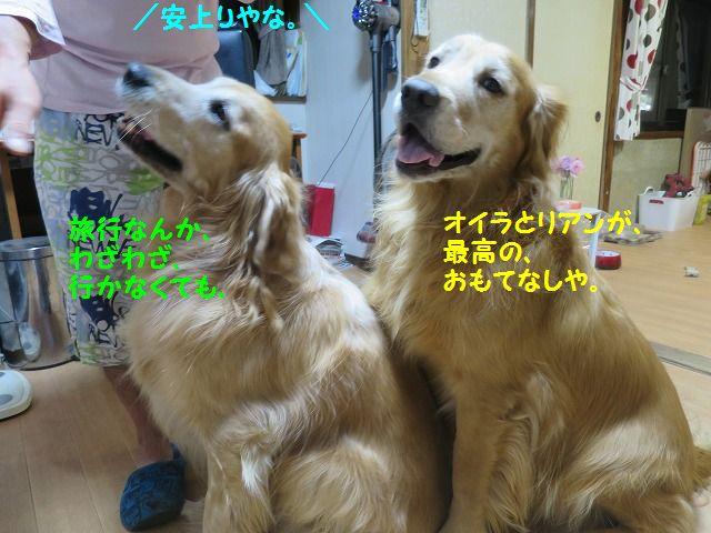 IMG_9010_20161021220118766.jpg