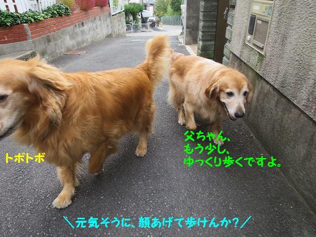 IMG_9022.jpg