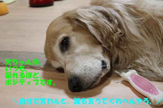 IMG_9681.jpg
