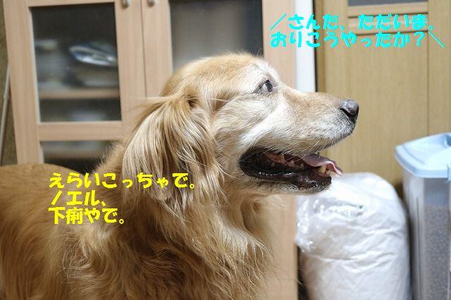 IMG_9738.jpg