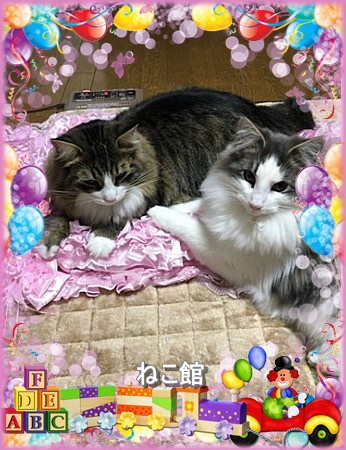 blog2_20160516100206c4a.jpg