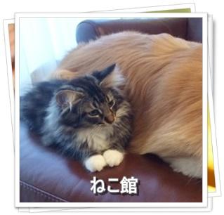 blog3_20160705064141e25.jpg