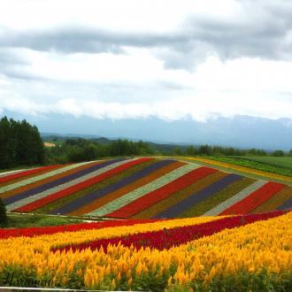 丘の上の花畑