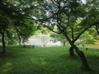 甘木公園を散歩