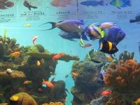 カラフル熱帯魚