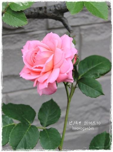 20150510IMG_9355-26.jpg
