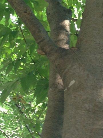 木の上の抜け殻を捕捉