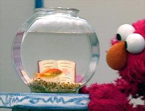 エルモの金魚ドロシー