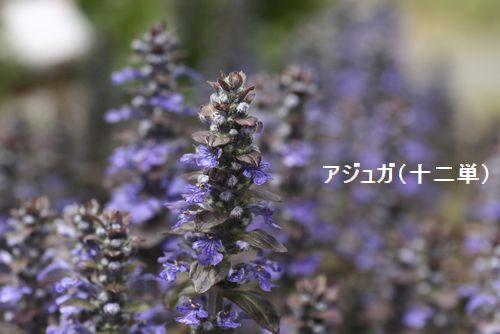 _MG_5220.jpg